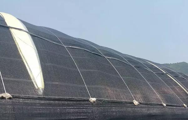 热收缩造成的遮阳网撕裂