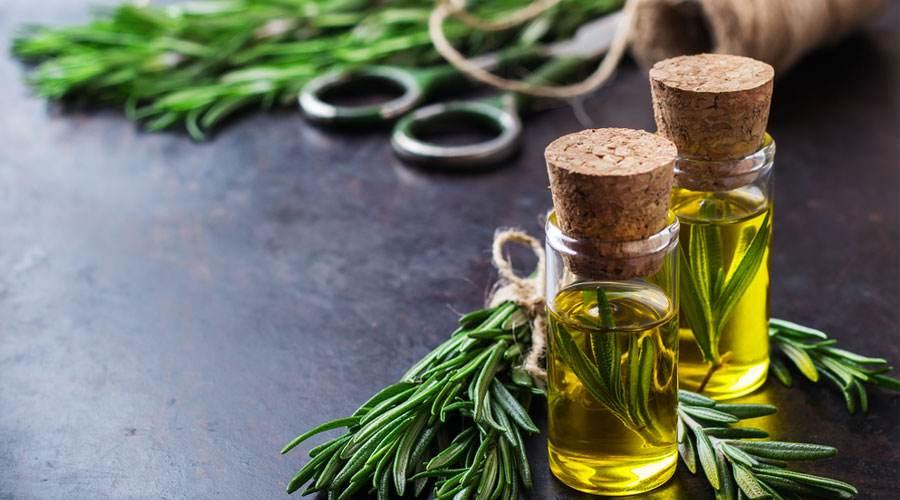 迷迭香植物提取物天然抗氧化应用