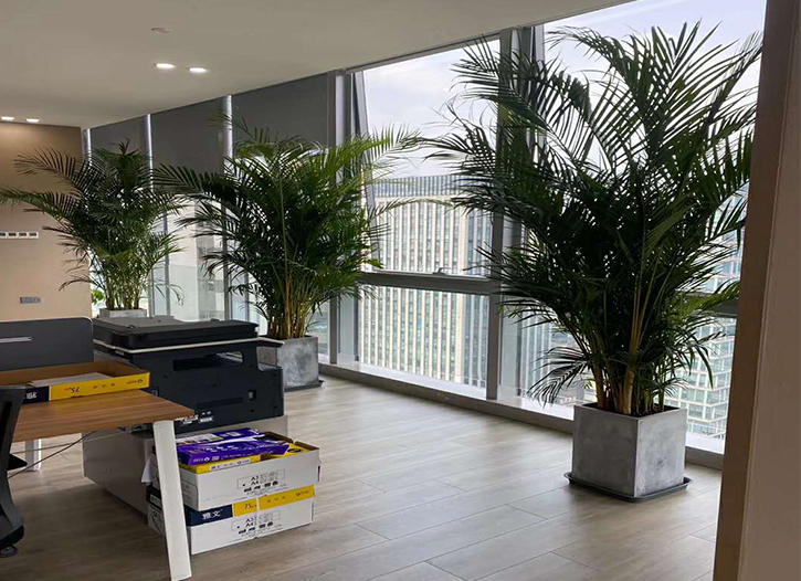 眉山公司辦公室綠植