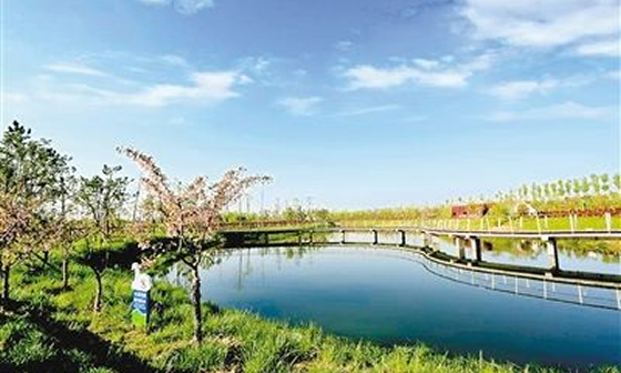 沣河水面防护、防渗工程