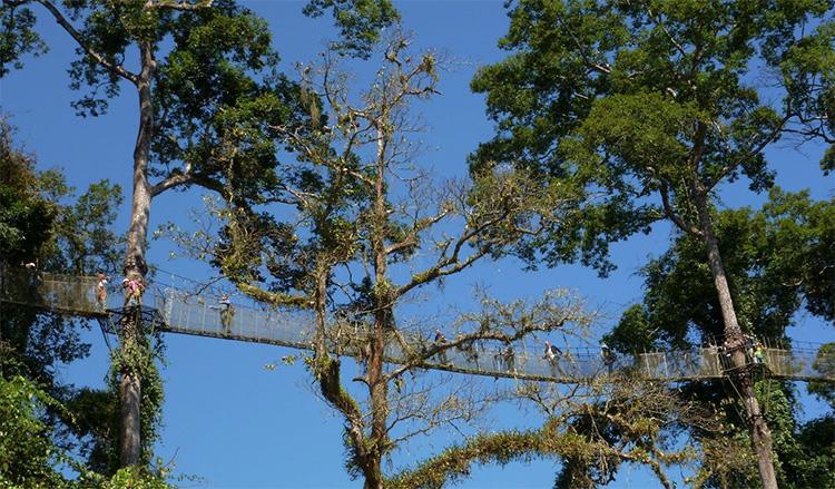 望天树·热带雨林国家公园