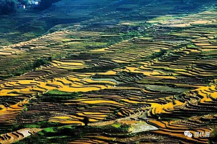 云南红河旅游攻略:元阳梯田