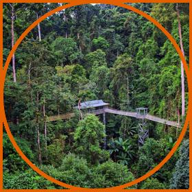 云南西双版纳热带雨林公园旅游攻略