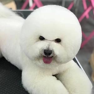 博美犬造型设计