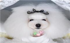 什么是宠物美容?