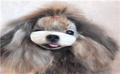 沈阳宠物美容培训店带你看江苏盐城一化工园区发生爆炸