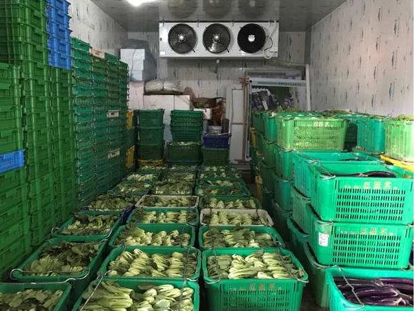 蔬菜储藏冷库