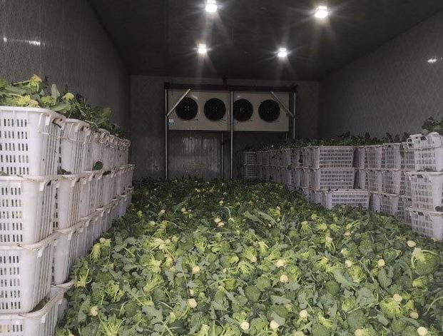 蔬菜冷藏冷库