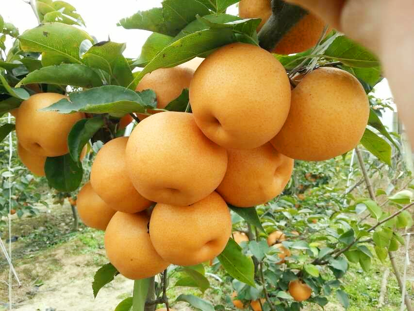 贵州农业项目是加入龙岗网站优化公司制作的网络推广方案