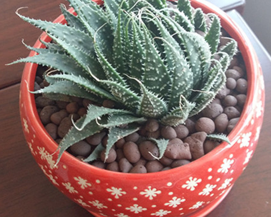 福州花卉陶粒
