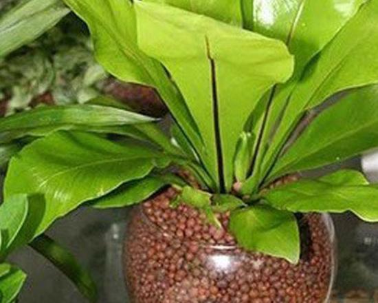福州绿化陶粒