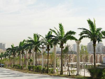仿真椰子树造型