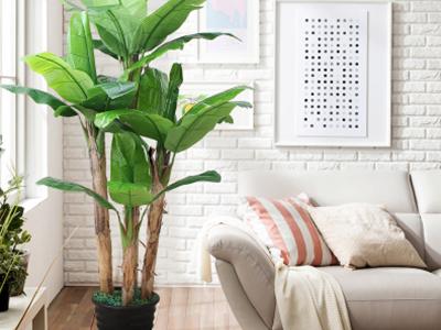 室内景观芭蕉树
