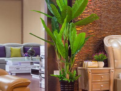 室内芭蕉树造型
