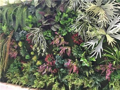 美观绿植墙