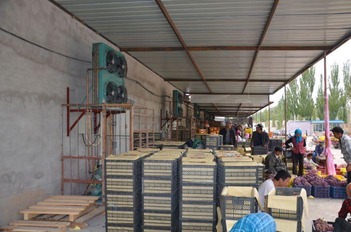 甘肃酒泉葡萄保鲜铝排库设计安装工程