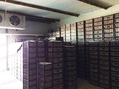 蘭州果蔬高溫保鮮庫設計安裝