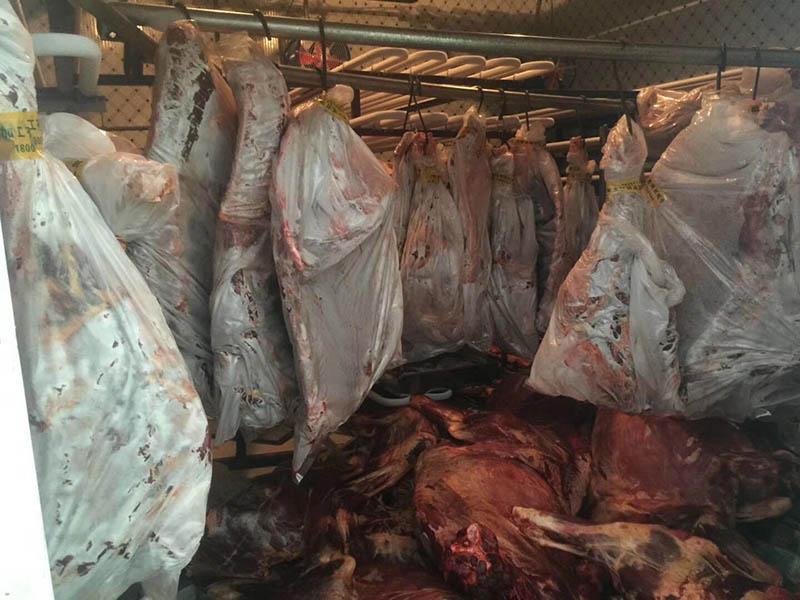 肉类冷冻库设计