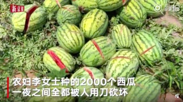 兰州九品轩餐桌椅带您看2000个西瓜被砍烂,媒体报道与事实有出入,警情通报尚未发布