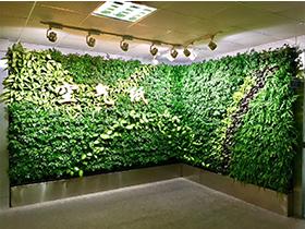 垂直绿化墙可以选择的绿化植物