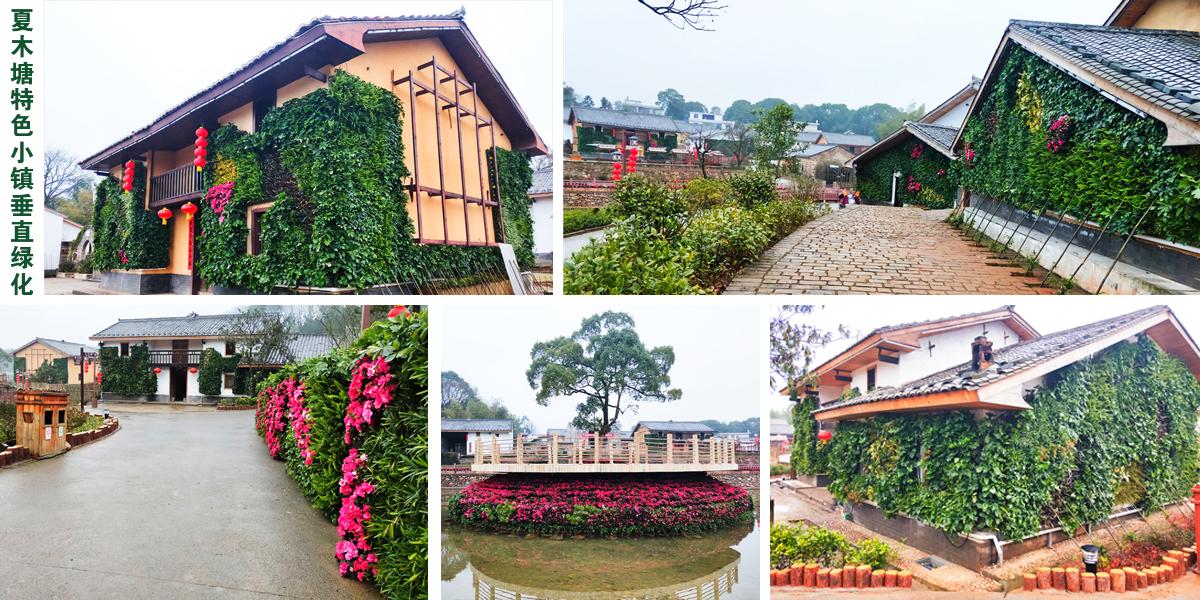夏木塘特色小镇垂直绿化案例