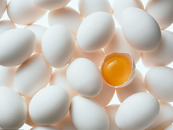 大中院校禽蛋类配送