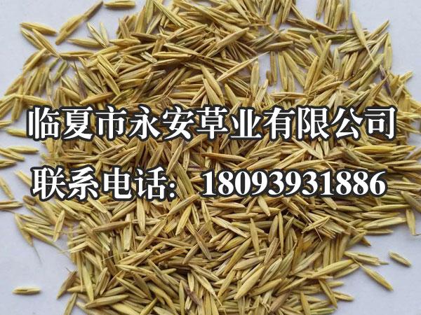 垂穗披碱草主要作刈割调制干草之用,以营养价值最高的抽穗期刈割为宜。