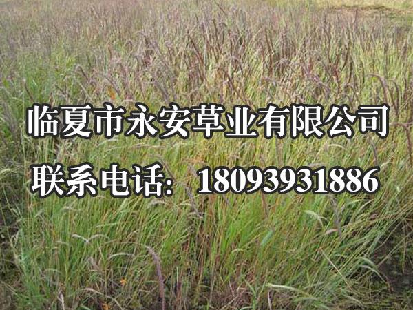披碱草适合的生长环境