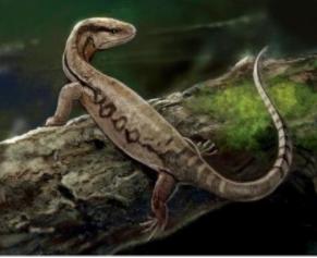 兰州兆盛源商贸公司分享一亿年蜥蜴吃麻小是什么情况?怎么回事?终于真相了,原来是这样!