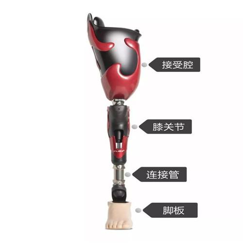 冀州市 大腿接受腔的安装方法