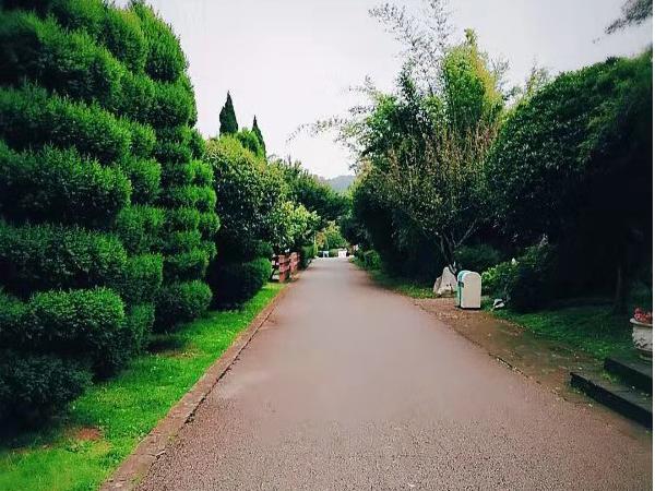 世博园店道路景色
