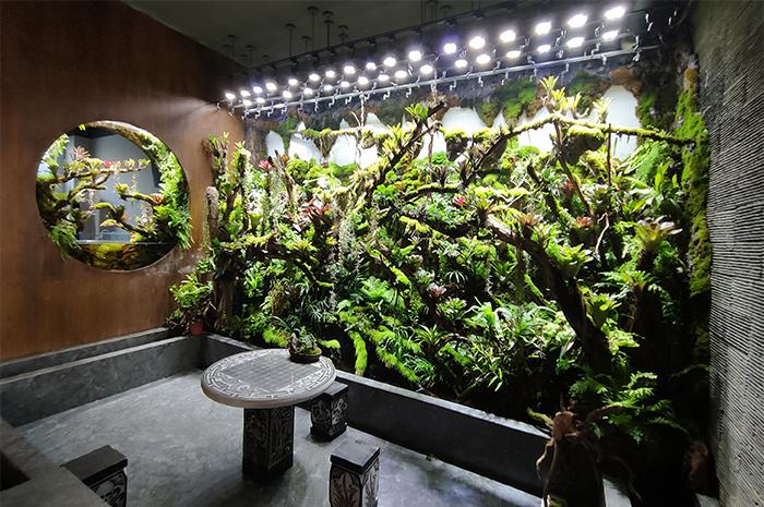 雨林造景墙