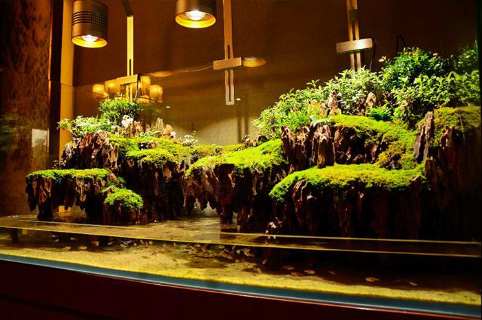 1.6米商业水陆缸造景