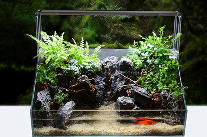 水陆生态缸