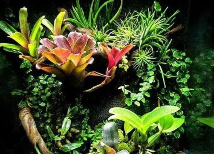 怎样展现雨林造景的空间感?