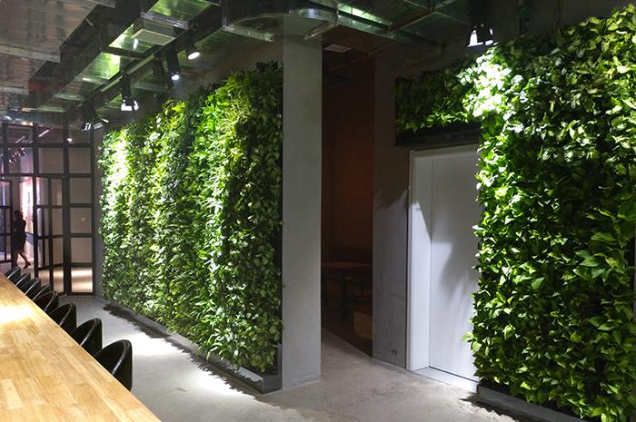MOJO咖啡厅生态植物墙