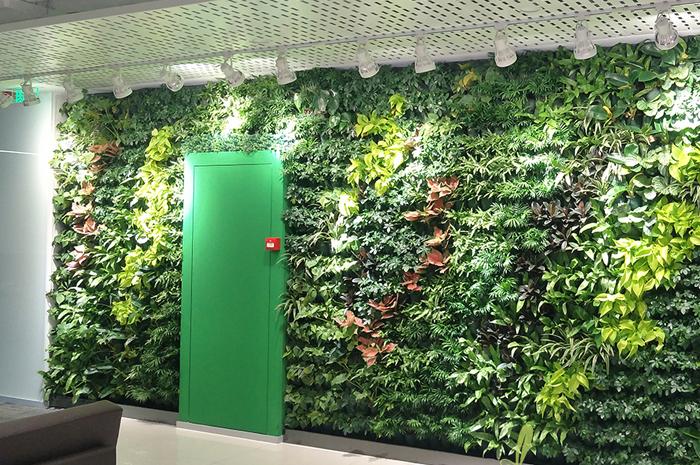 西安华为办公室真植物墙