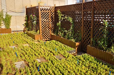 商城大厦屋顶绿化