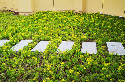 西安草坪式屋顶绿化