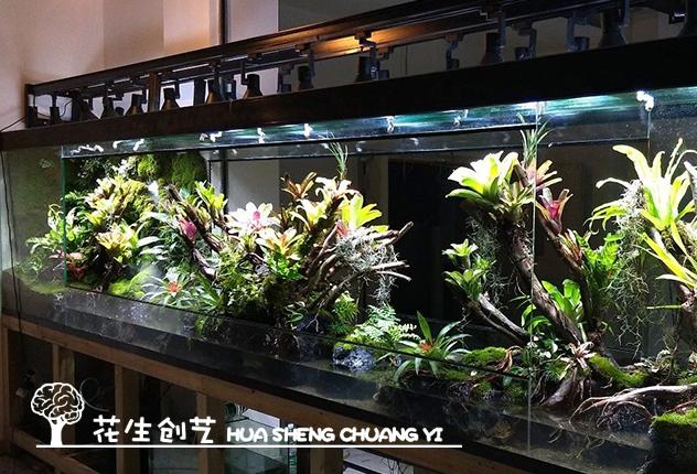 热带雨林缸制作植物需要多少光照?