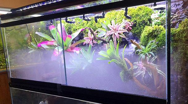 雨林缸背景板造景可以选择哪些植物呢?