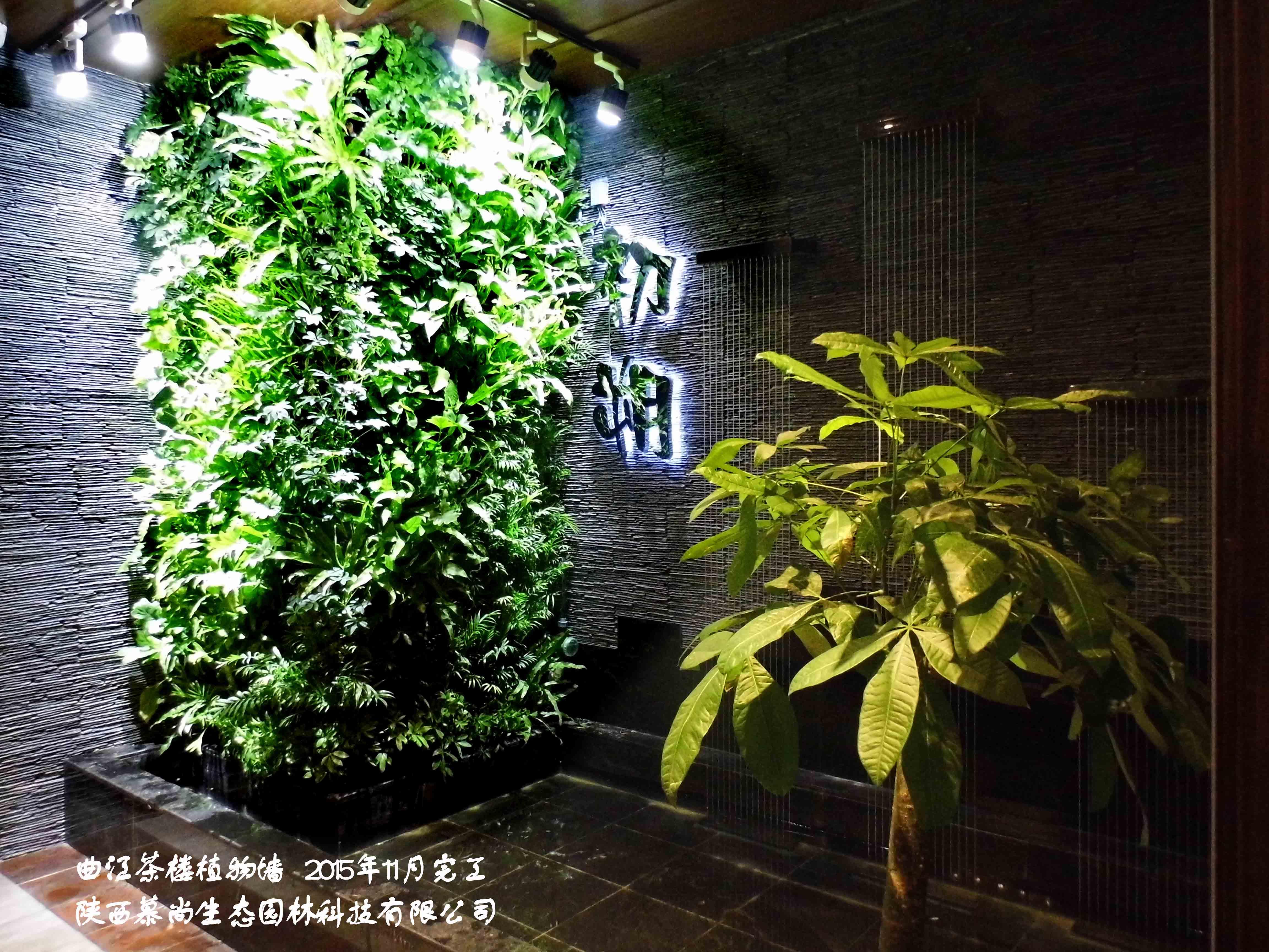 办公室植物墙,为您的公司布置一片森林