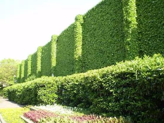 立体绿化在城市建筑景观设计的应用