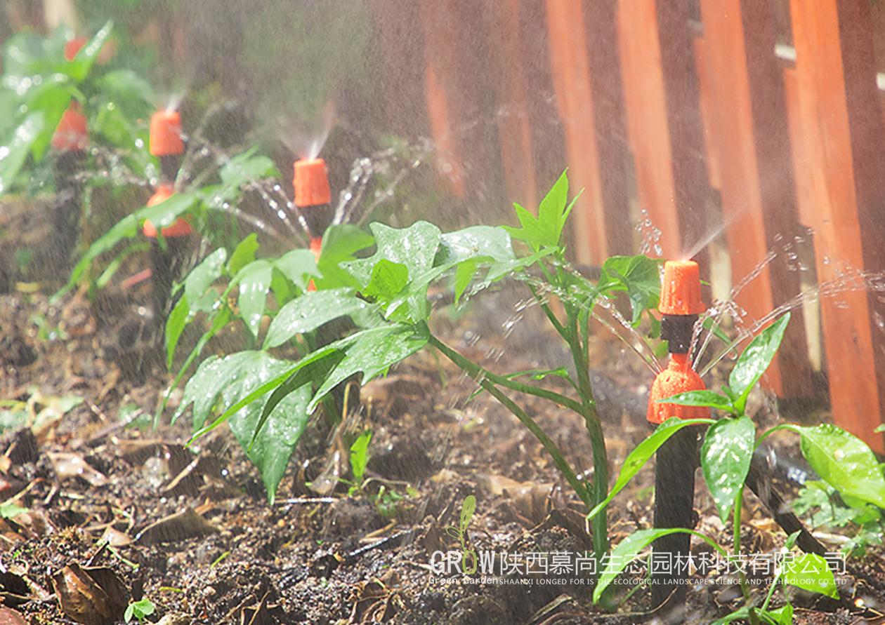 植物微喷灌溉