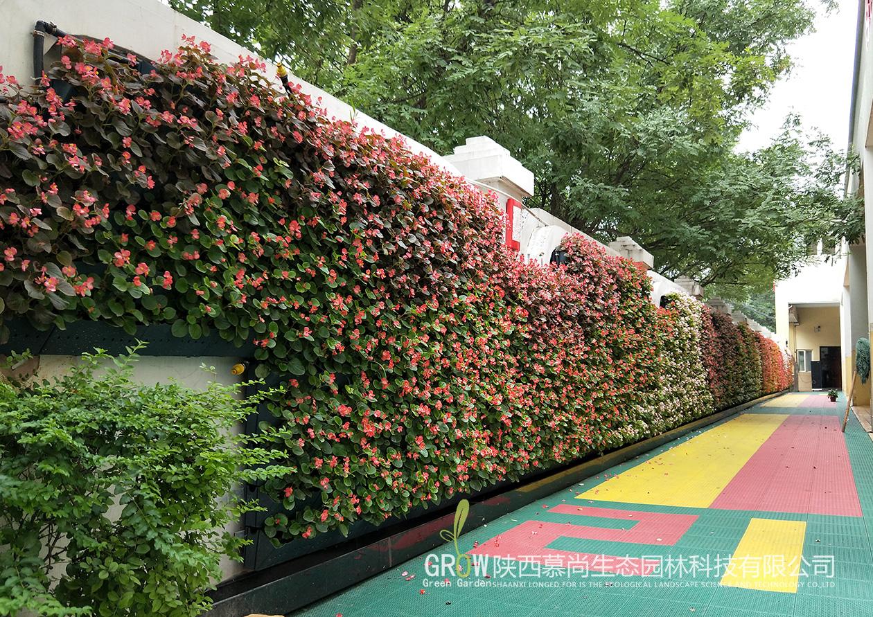 室外草花植物墙