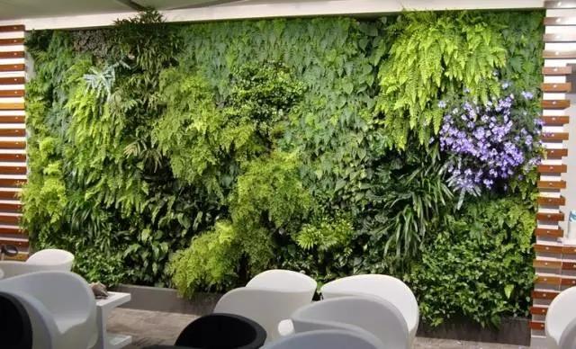 适合做植物墙的植物,你学到了吗?