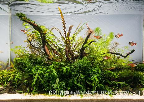 水草缸造景