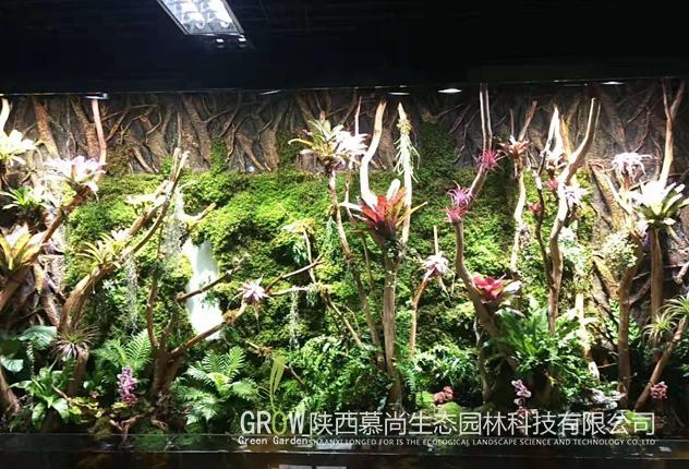 如何打造出一个一流的植物墙?