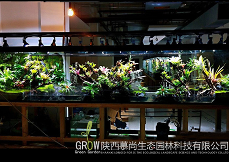热带雨林生态缸