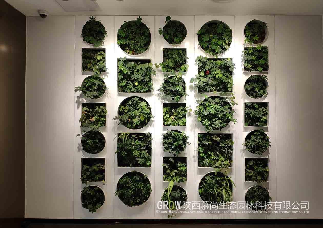 華清廣場室內植物墻